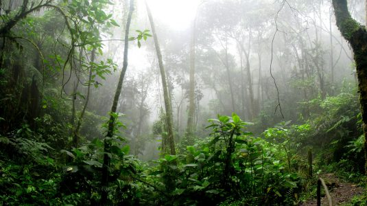 amazon-branches-dawn-975771