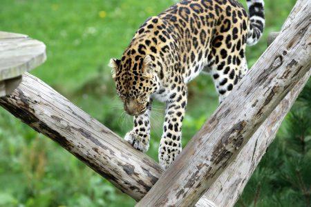 animal-animal-photography-big-209048