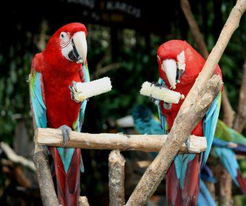 animal-avian-beak-1411281