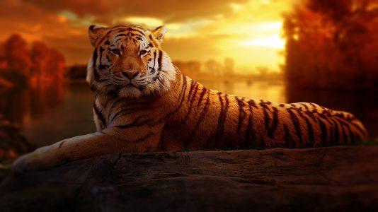 animal-big-cat-jungle-206622