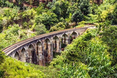 bridge-daylight-jungle-595196